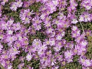 Paarse bloemetjes in het groen